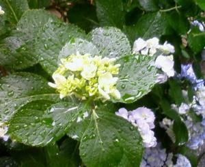 nadeshiko11102011-06-16