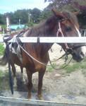 naish2005-08-08