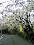 naish2007-04-01