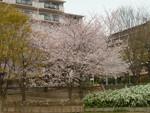 nakatomimoka2013-04-05