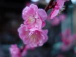 nakatomimoka2014-03-20
