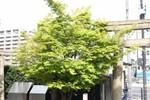 nakatomimoka2014-04-07