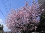 nurikabe-majin2008-03-25