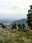 すすきの向こうに富士山
