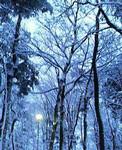 2004年大晦日、地元にて、雪。