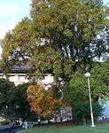 上野の博物館。ちょっとだけ紅葉