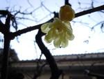 pakira_s2011-02-05