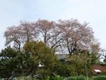 parupu2014-04-12