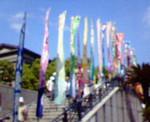 peat2005-06-29