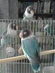 peepooblue2006-04-27