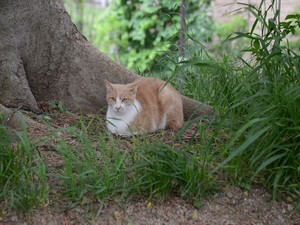 江戸城の堤にたたずむ猫