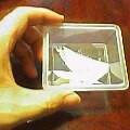 prader-willi2004-10-01