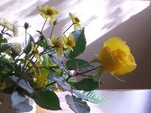 [花]秋の花