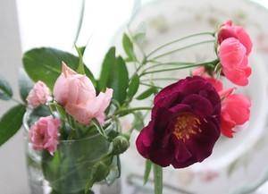 [生け花]バラ