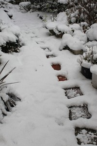[自然]庭の積雪
