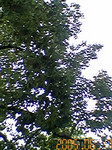 ripjyr2005-06-17