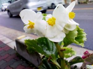 ripjyr2007-11-01