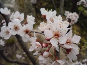 ripjyr2008-03-30