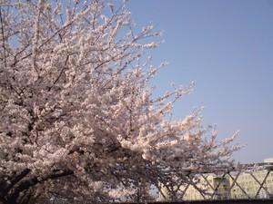 ripjyr2008-04-06