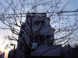 rosa412004-03-27