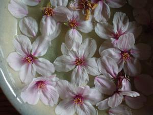 rosa412004-04-03