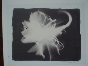 rosa412004-04-04