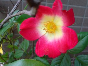 rosa412004-05-01