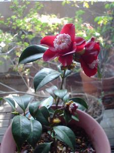 rosa412004-05-05