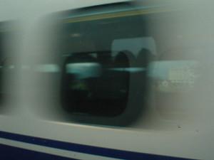 rosa412004-06-04