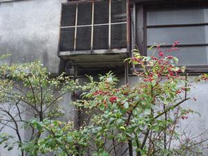 rosa412004-11-01