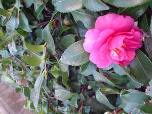 rosa412004-12-21