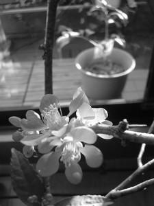 rosa412005-01-09