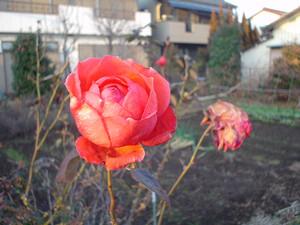 rosa412005-01-28