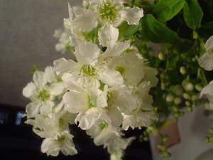 rosa412005-06-01