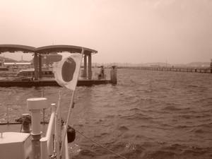 rosa412006-02-07