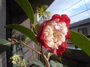 rosa412006-02-11
