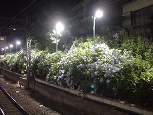 rosa412006-06-19
