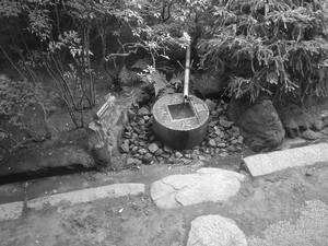 rosa412006-10-27