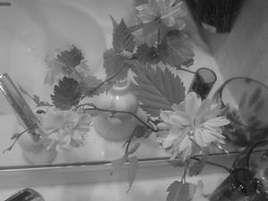 rosa412007-04-25