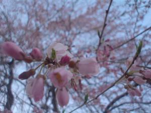 rosa412007-04-27