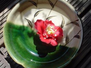 rosa412008-09-19