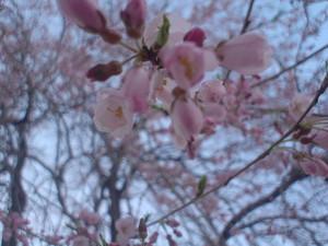 rosa412009-04-07