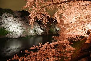 千鳥ヶ淵緑道の夜桜(ライトアップ)