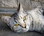 sanshu_seiso2007-01-11