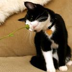 鼻と花と猫
