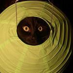 妖怪まんまる猫目