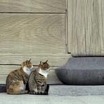 大山鳴動して猫2匹