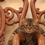 猫オリンピック希望