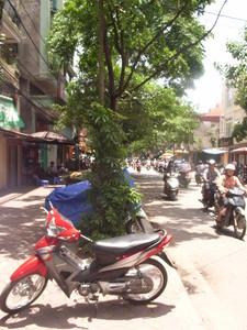 sayakot2008-06-20