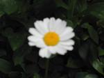 shig552006-05-09
